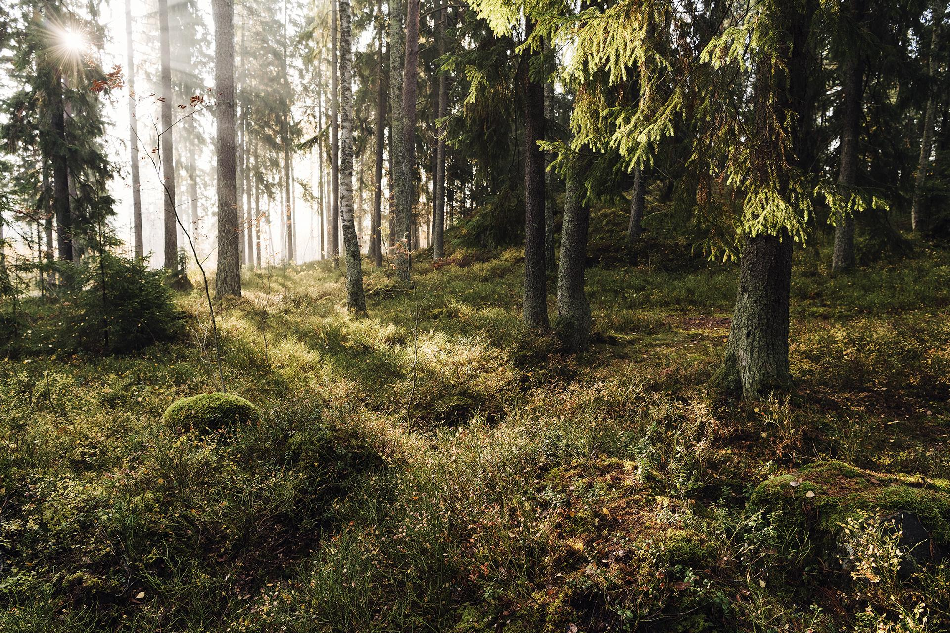 forest-pulp-paper-adven